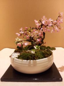 Saika Bonsai‼💎💎💎5/6・・・#彩花盆栽-4