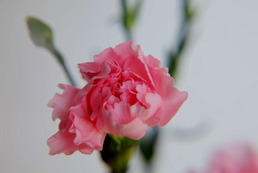 5/13(日)・母の日・感謝の朝です。