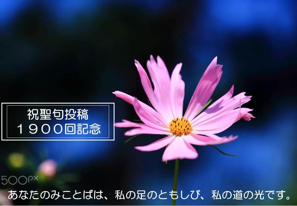 8/30(木)『聖句投稿・祝1900回記念投稿』 Daily WORD#1900