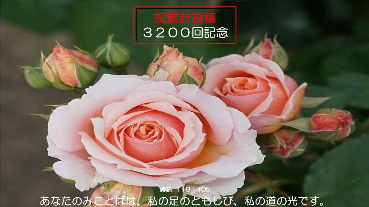 5/26㈬『朝の聖句』Daily WORD#2900