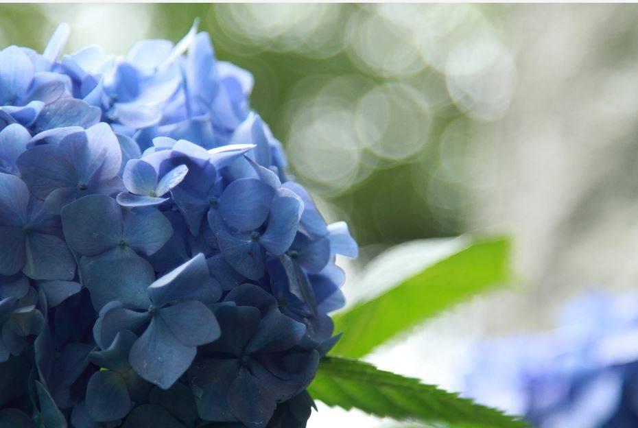6/1㈫『朝の聖句』Daily WORD#2906